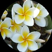ハワイアンキルト教室 wailea