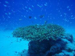 沖縄 ダイビング セリシャスクラブ