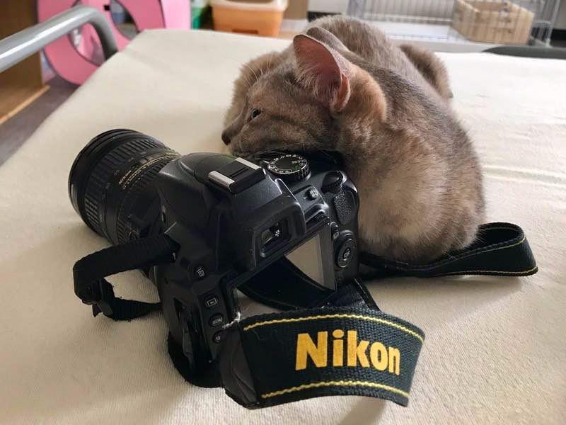【初心者限定】猫と一緒に♪ゆるく楽しく写真の勉強会!