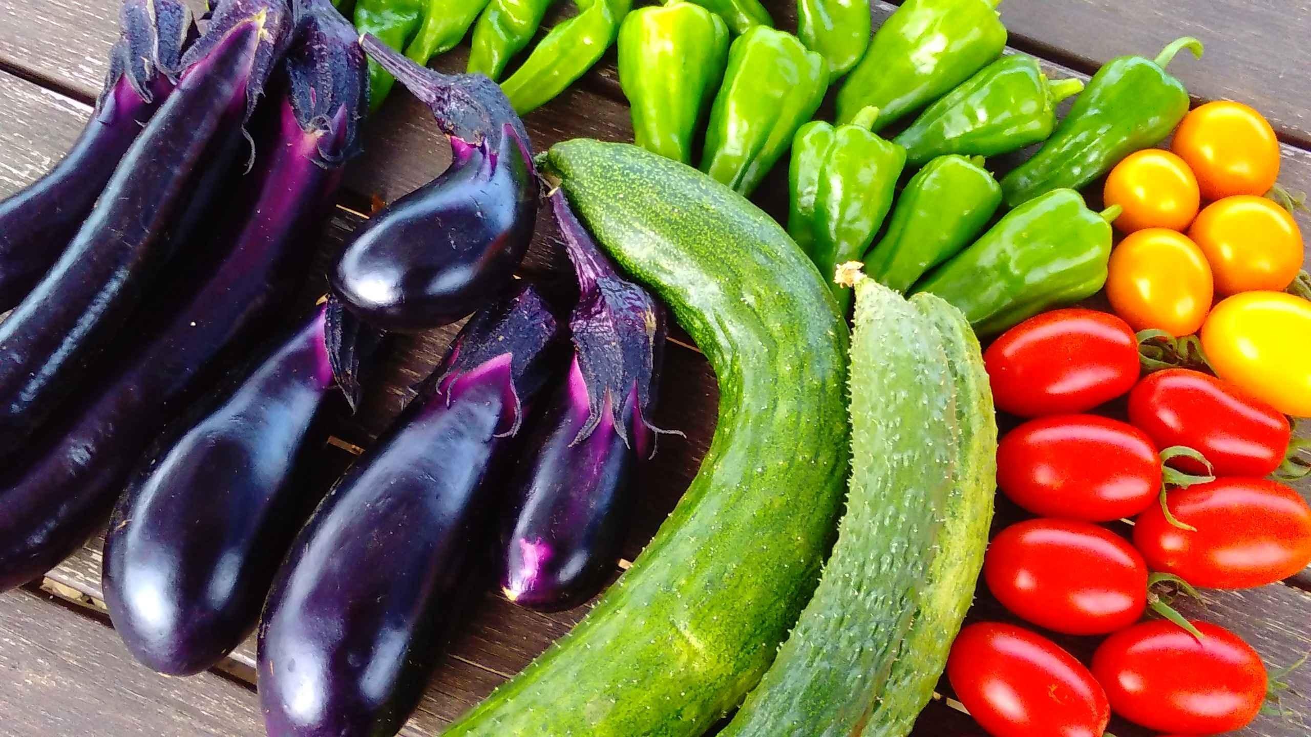 【シェア畑】お野菜作りに興味のある方大募集‼【足立青井】