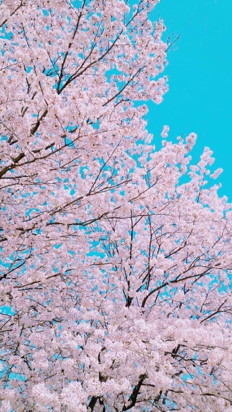 piano教室♪健軍参道教室♪ 桜木教室♪