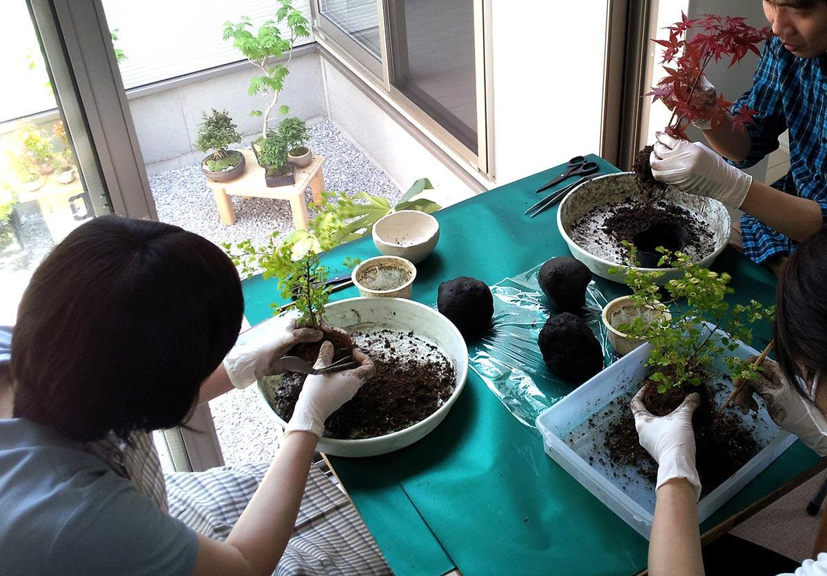 みどり屋 和草の苔玉・盆栽・苔テラリウム教室