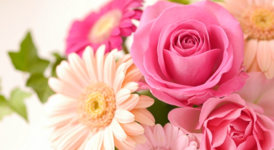 <趣味なび限定企画>気になるお花でリフレッシュ!